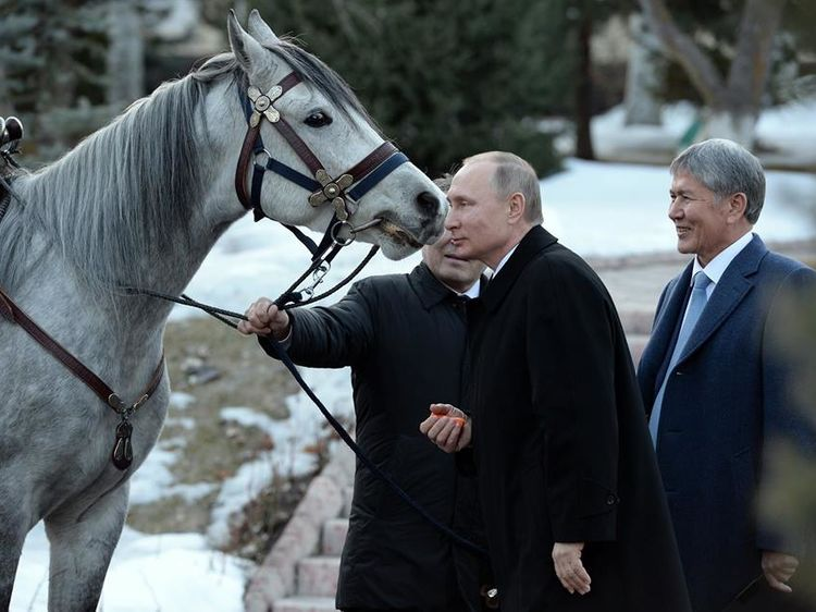 Almazbek Atambayev Presents Vladimir Putin Arabian Horse English Www 24 Kg Kyrgyzstan