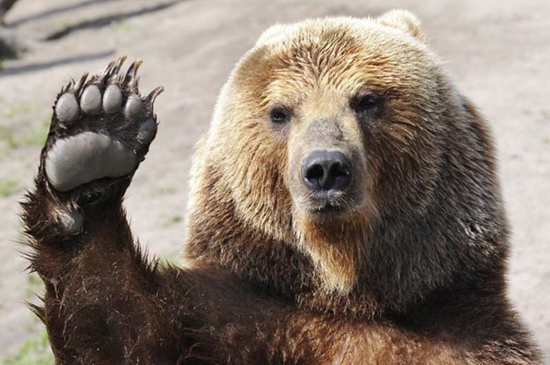 Картинки по запросу в америке медведь   залез в магазин