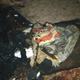 Фото Пожар в селе Маевка