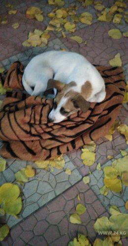Фото читателя 24.kg. Спасенная собака