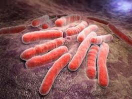 Tuberculosis incidence rate remains stable in Kyrgyzstan