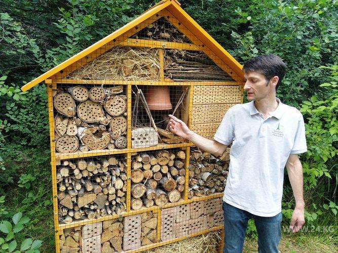Фото 24.kg. Гостиница для насекомых. Так Филипп называет это сооружение