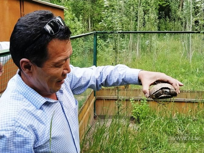 Фото 24.kg. Специалисты стараются восстановить популяцию черепах