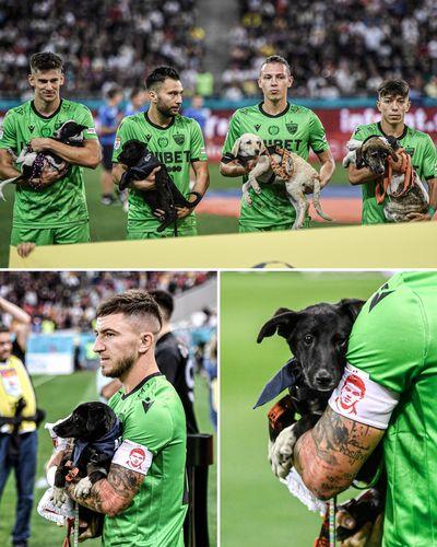 Фото Twitter. В Румынии футболисты будут выходить на поле с бездомными животными